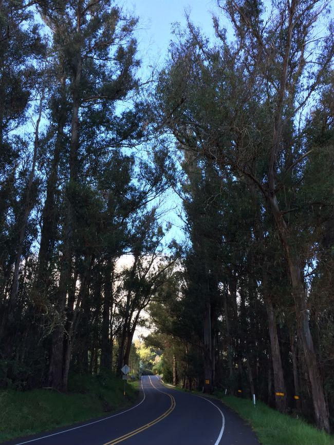 eucalyptus forests mt haleakala